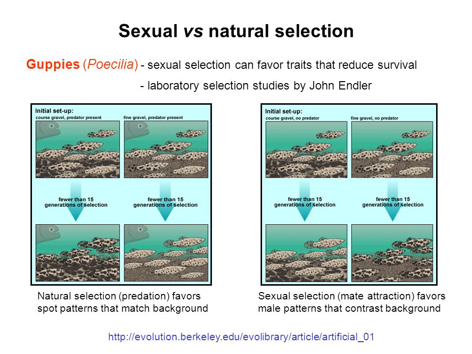 Sexual selection different from natural selection