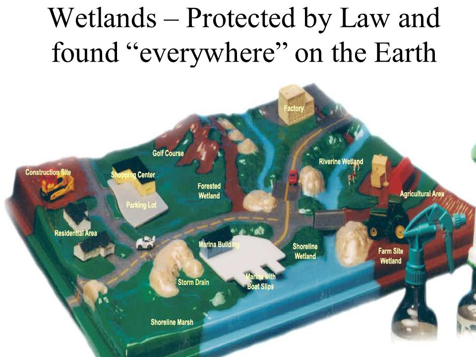 Wetlands – Protected by Law and found everywhere on the Earth