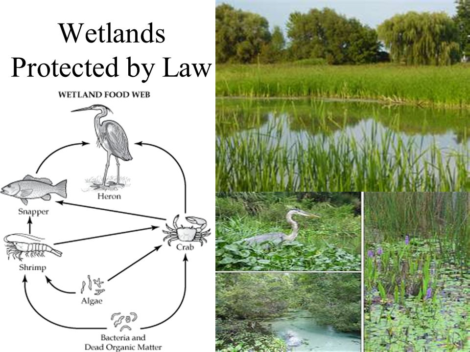 Wetlands Protected by Law