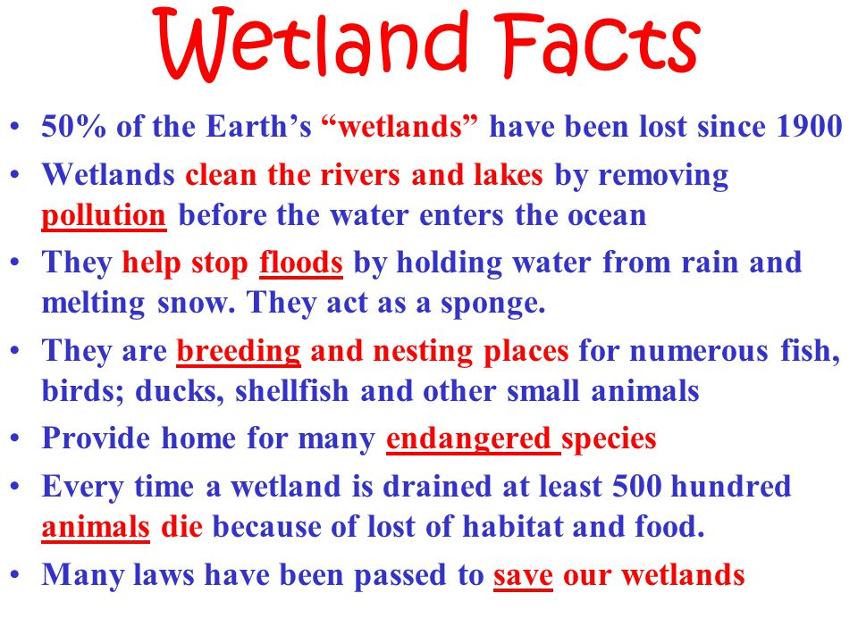 Wetland Facts 50% of the Earth's wetlands have been lost since 1900