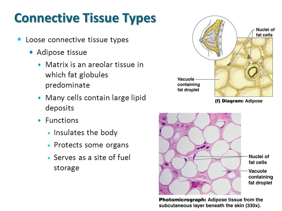 Cells And Tissues Part I Cell Structures Ppt Video Online Download