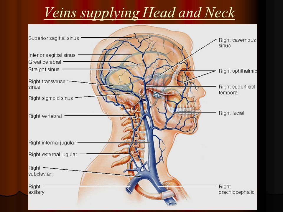 Blood Supply Of Head Neck Ppt Video Online Download