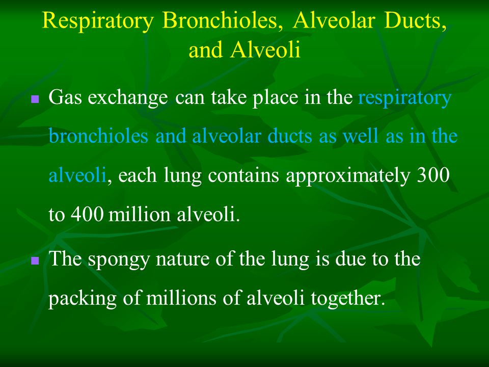 Respiratory Bronchioles, Alveolar Ducts, and Alveoli