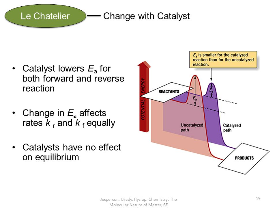 Catalyst lowers Ea for both forward and reverse reaction