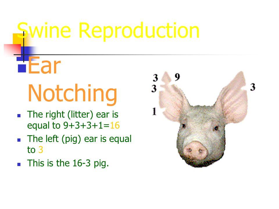 Baby Pig Management Ppt Video Online Download