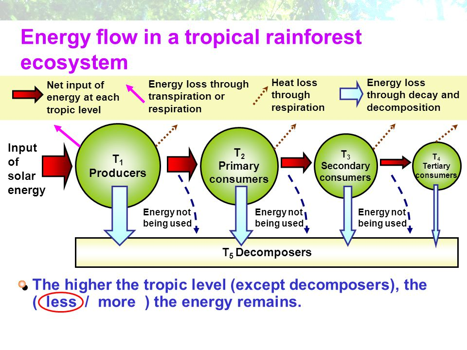 tropical rainforest producers consumers and decomposers