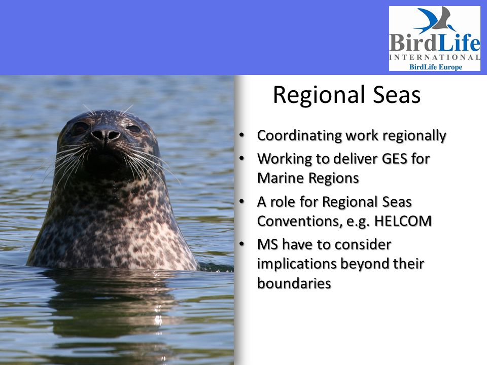 Regional Seas Coordinating work regionally
