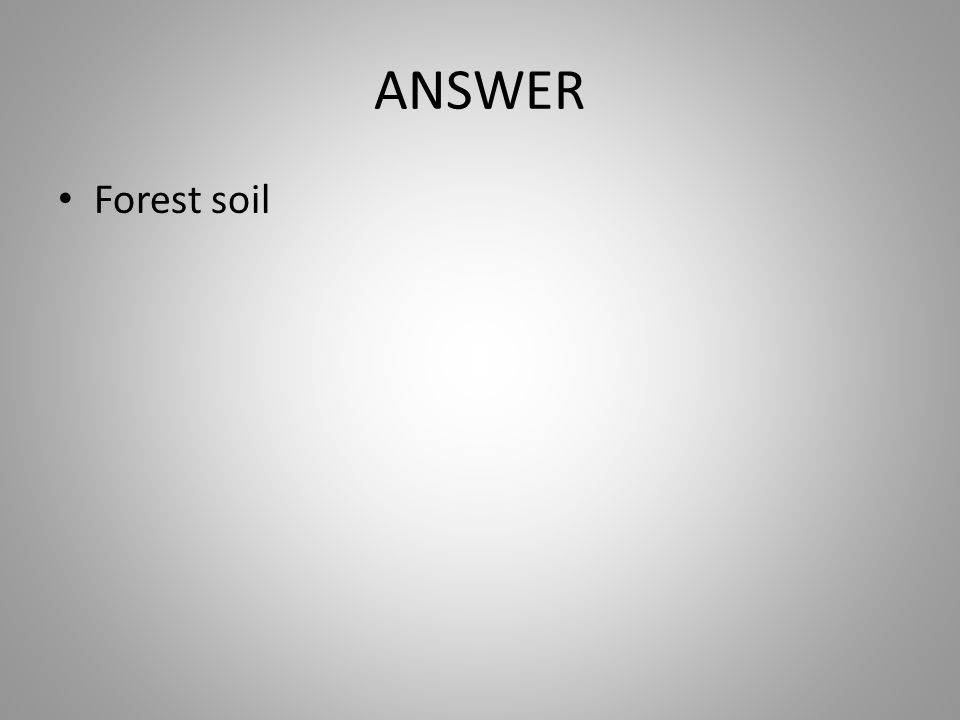 ANSWER Forest soil