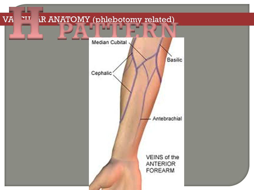 Phlebotomy Veins Foot Diagram - Example Electrical Circuit •