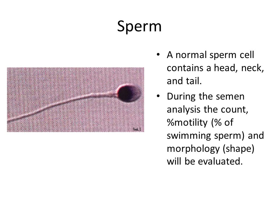 improve-sperm-motility-and-morphology-girls-get-fucked