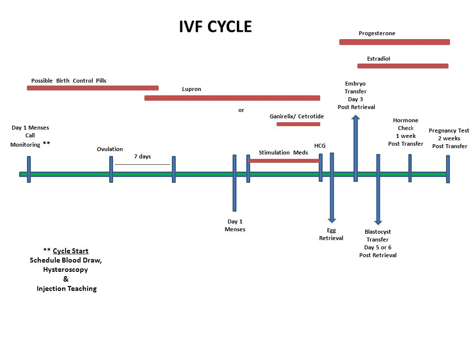 IVF Orientation  - ppt video online download