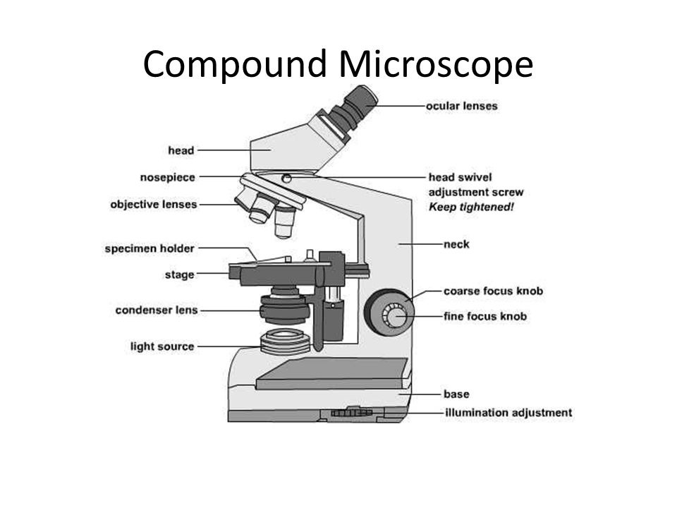 Focus knobs microscope diagram online schematic diagram the microscope ppt video online download rh slideplayer com microscope slide dissecting microscope diagram ccuart Image collections