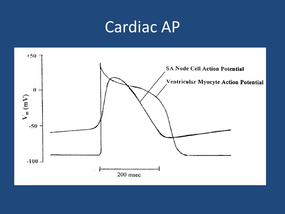 Cardiac action potential ppt video online download 13 cardiac ap pacemaker potential ccuart Choice Image