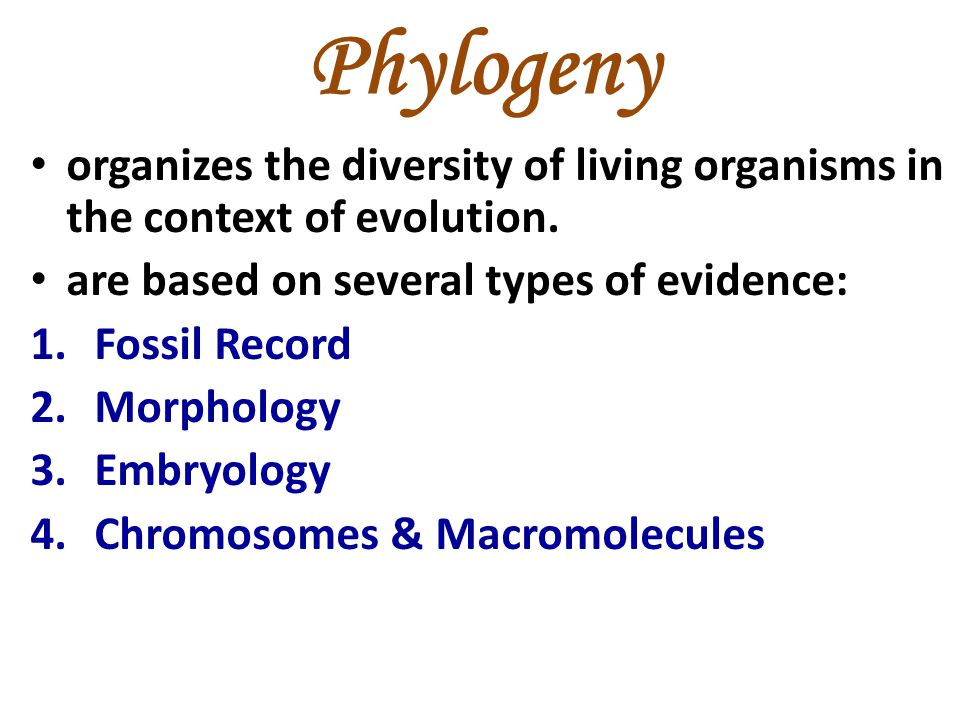 Phylogeny organizes the diversity of living organisms in the context of evolution. are based on several types of evidence: