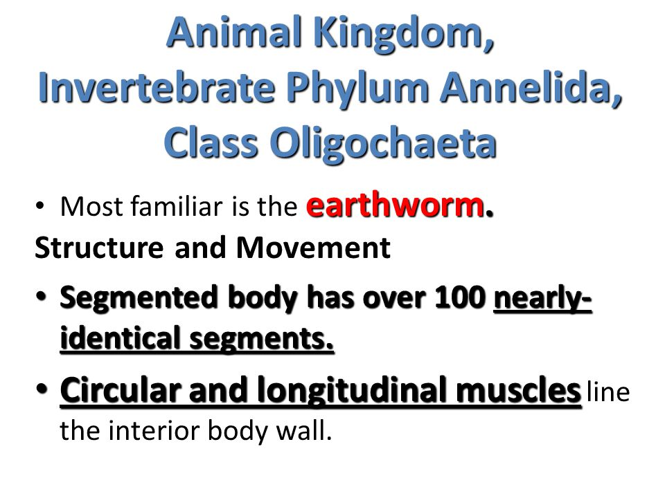 Animal Kingdom, Invertebrate Phylum Annelida, Class Oligochaeta