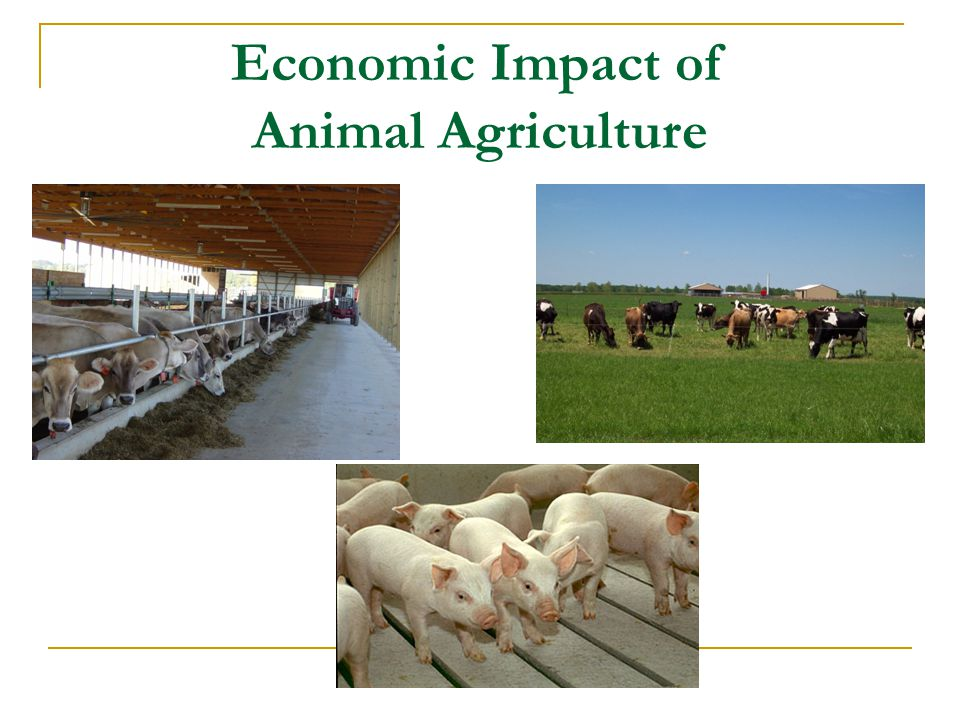 Economic Impact of Animal Agriculture