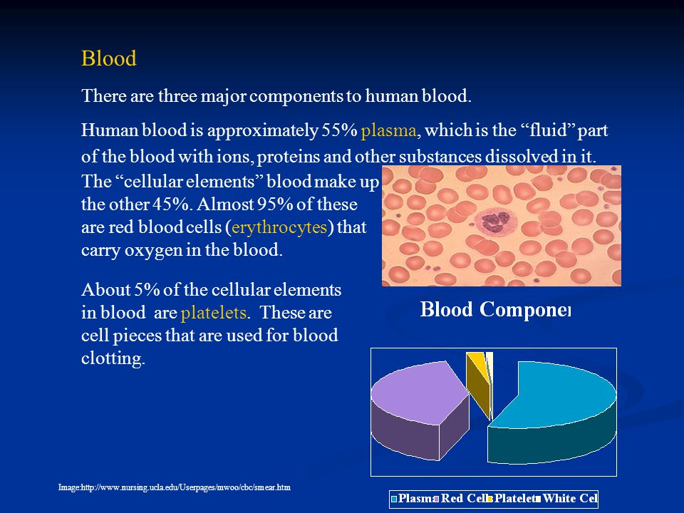 Blood There are three major components to human blood.