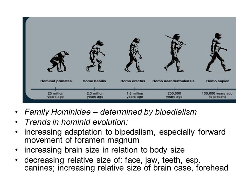 Family Hominidae – determined by bipedialism