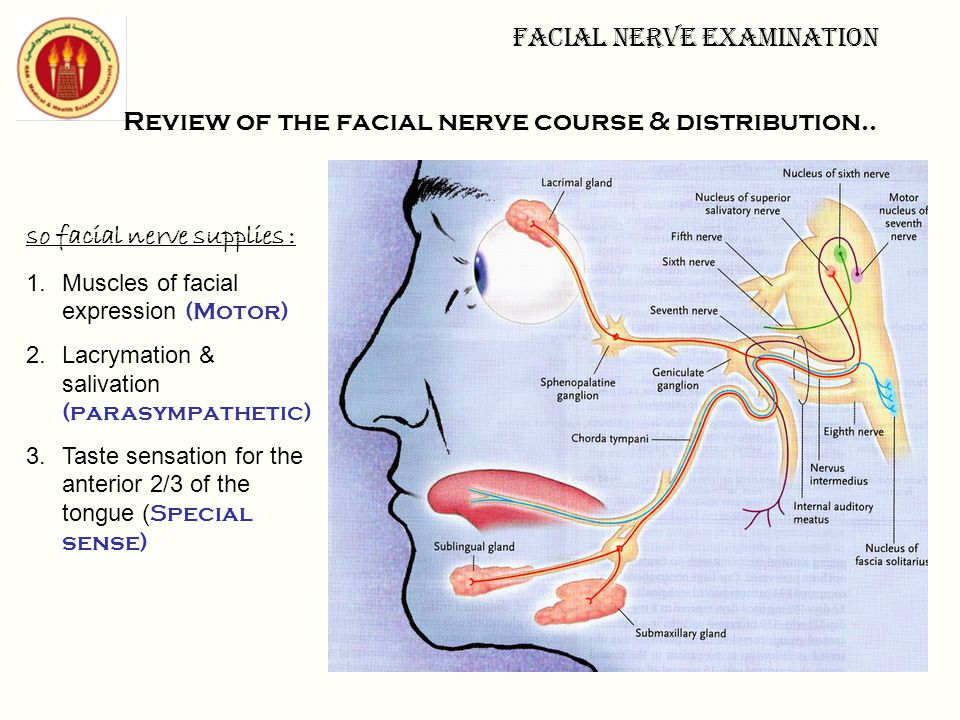 Clinical skills lab. Facial nerve examination Sunday - ppt download
