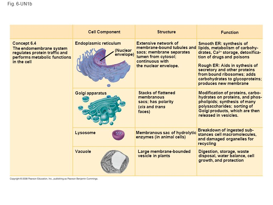 a brief introduction to the cell structure and function The following outline is provided as an overview of and topical guide to cell biology:  cell biology – a branch of biology that includes study of cells regarding their physiological properties, structure, and function the organelles they contain interactions with their environment and their life cycle, division, and deaththis is done both on a microscopic and molecular level.