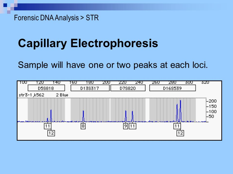 capillary electrophoresis in dna analysis