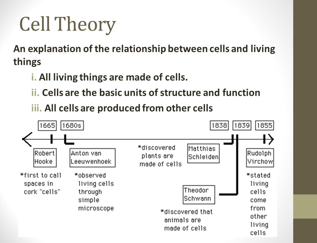 Cell Theory Concept Map.Ppt Video Online Download