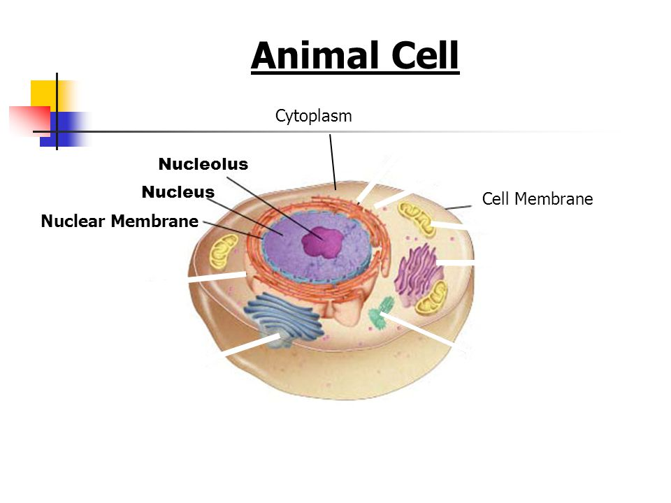 Cell Structures, Funct...