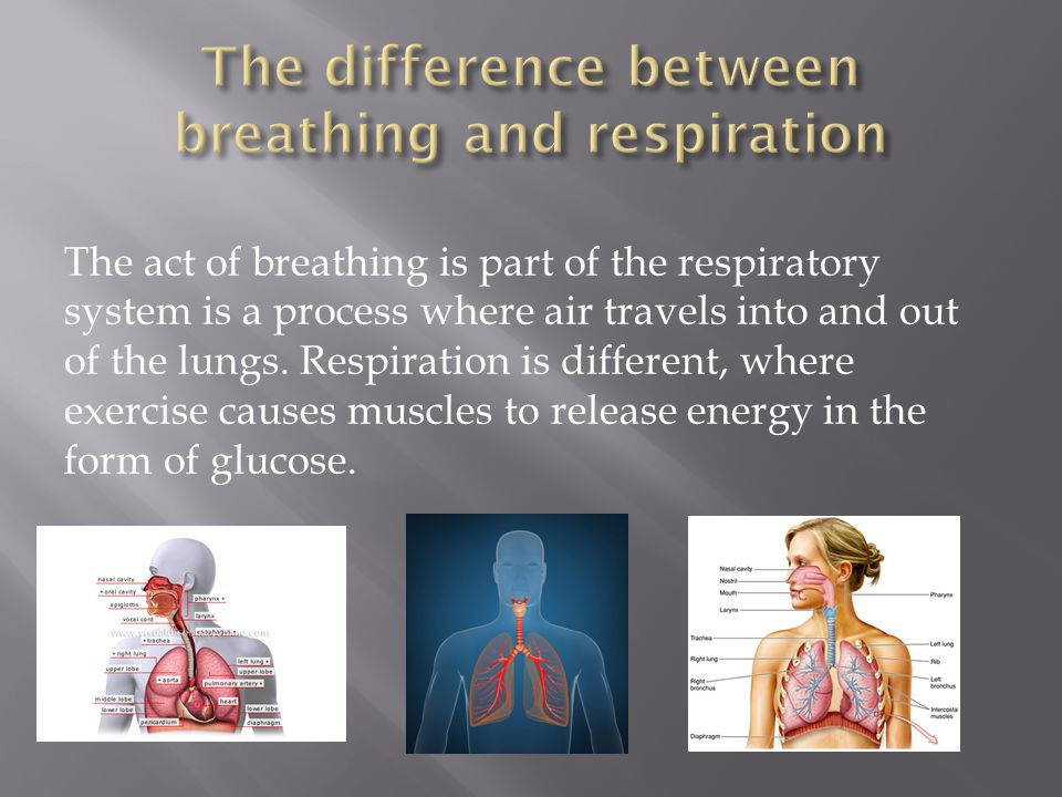 The difference between breathing and respiration
