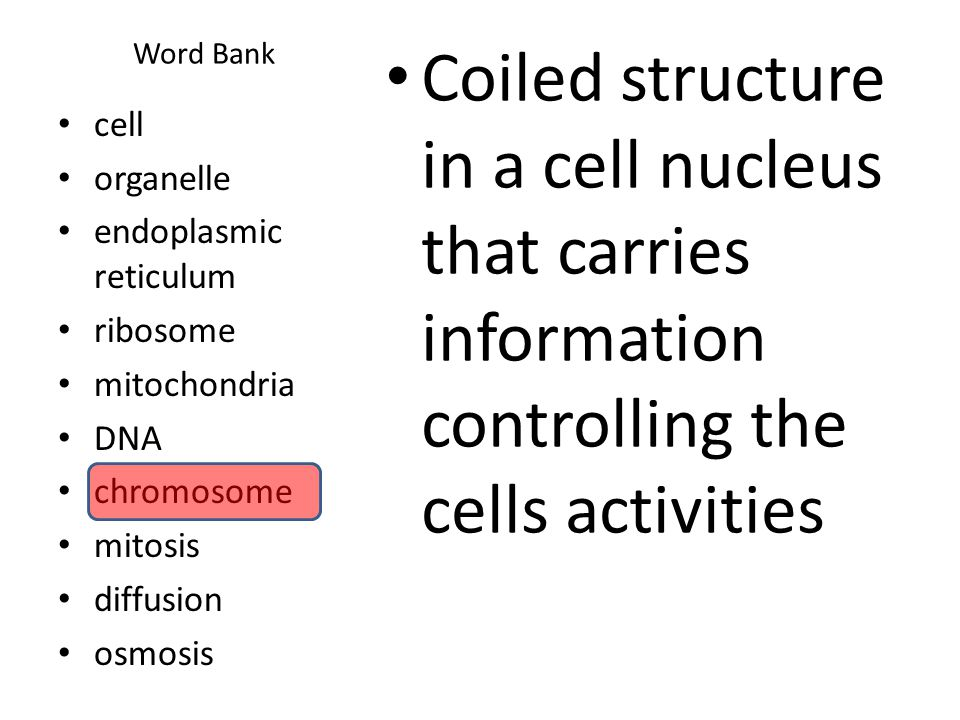 Word Bank Coiled structure in a cell nucleus that carries information controlling the cells activities.