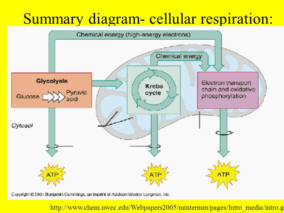Chapter 7 cellular respiration ppt download 30 summary diagram cellular respiration ccuart Gallery
