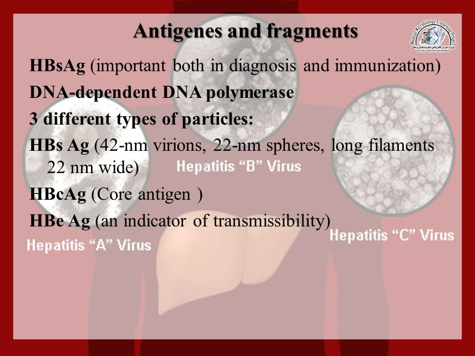 Antigenes and fragments