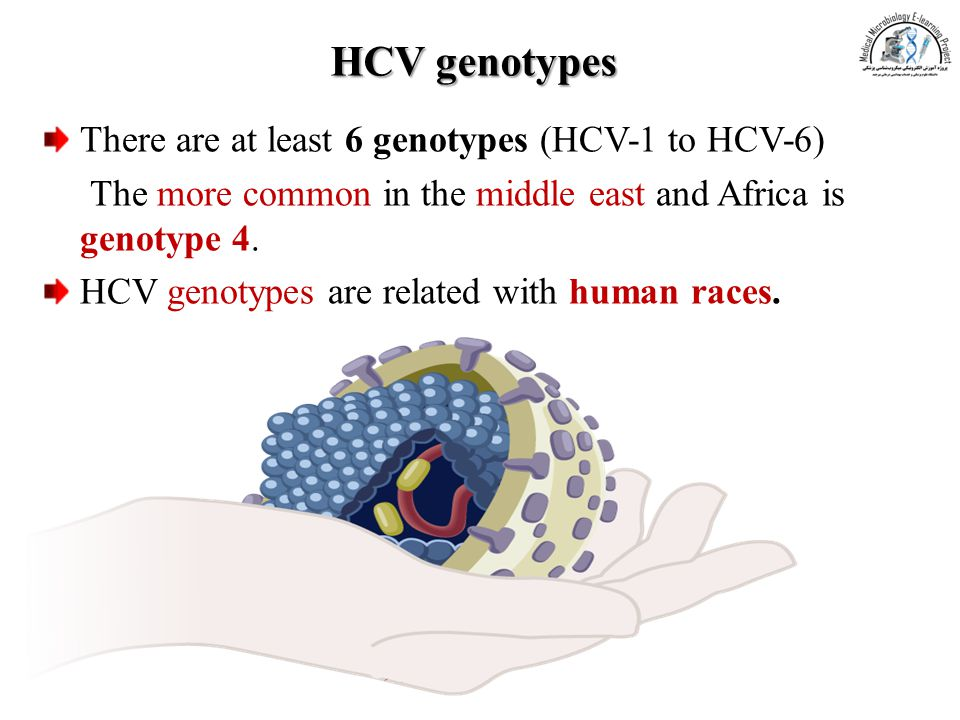 HCV genotypes There are at least 6 genotypes (HCV-1 to HCV-6)