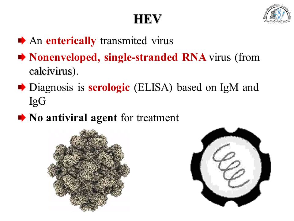 HEV An enterically transmited virus