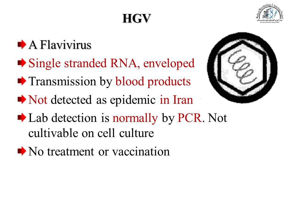 HGV A Flavivirus. Single stranded RNA, enveloped. Transmission by blood products. Not detected as epidemic in Iran.