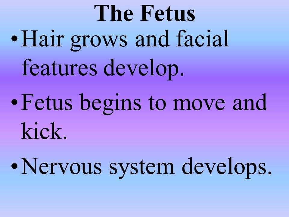 The Fetus Hair grows and facial features develop. Fetus begins to move and kick.