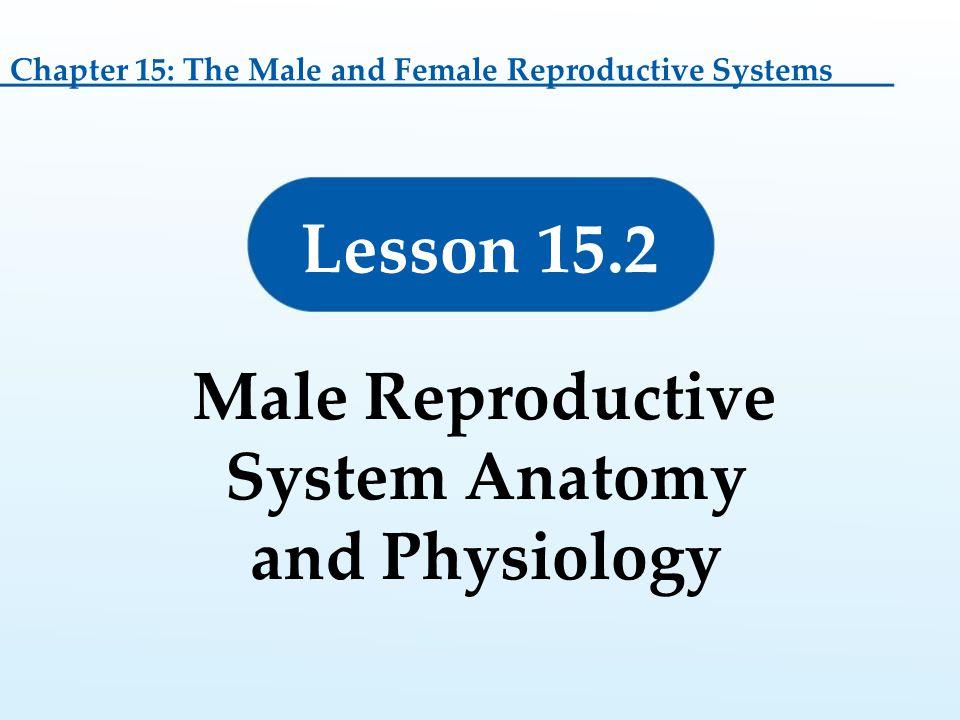Bonito Human Reproductive Anatomy And Physiology Festooning ...