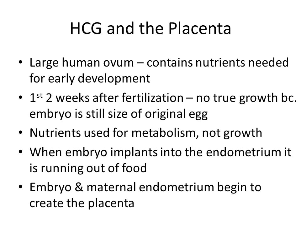 HCG and the Placenta Large human ovum – contains nutrients needed for early development.