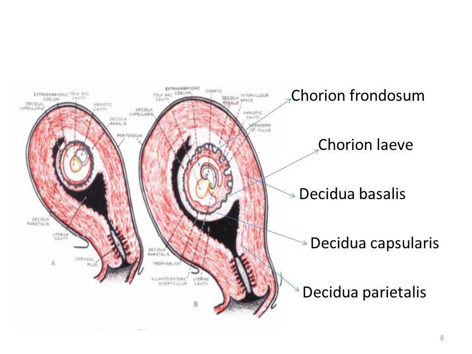 Erfreut Chorion Frondosum Ideen - Menschliche Anatomie Bilder ...