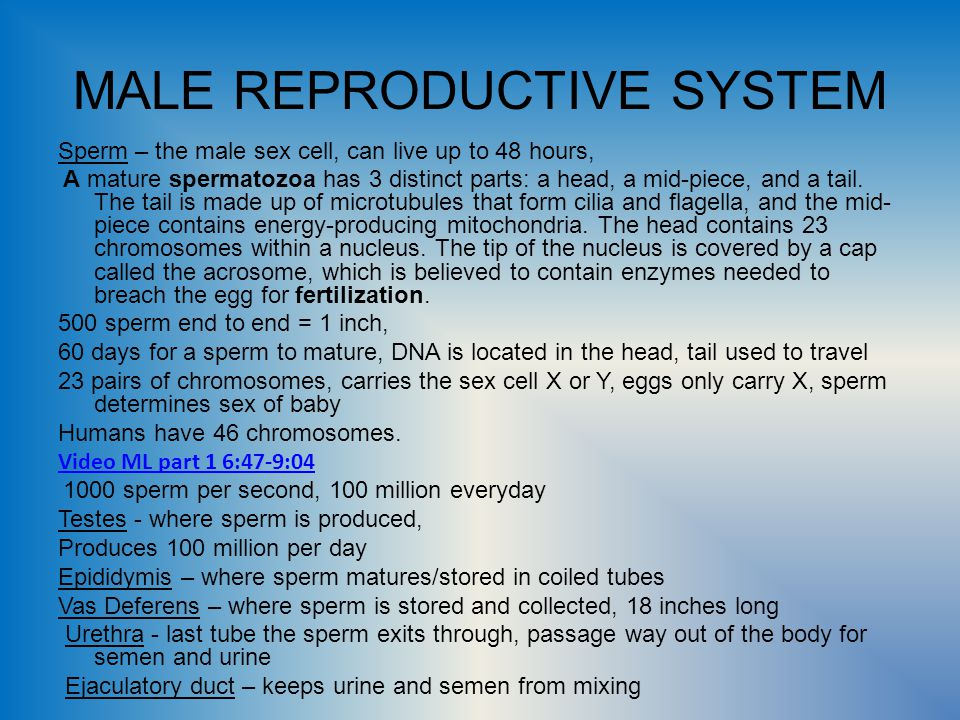 Male And Female Reproductive System Video Lifes Greatest Miracle