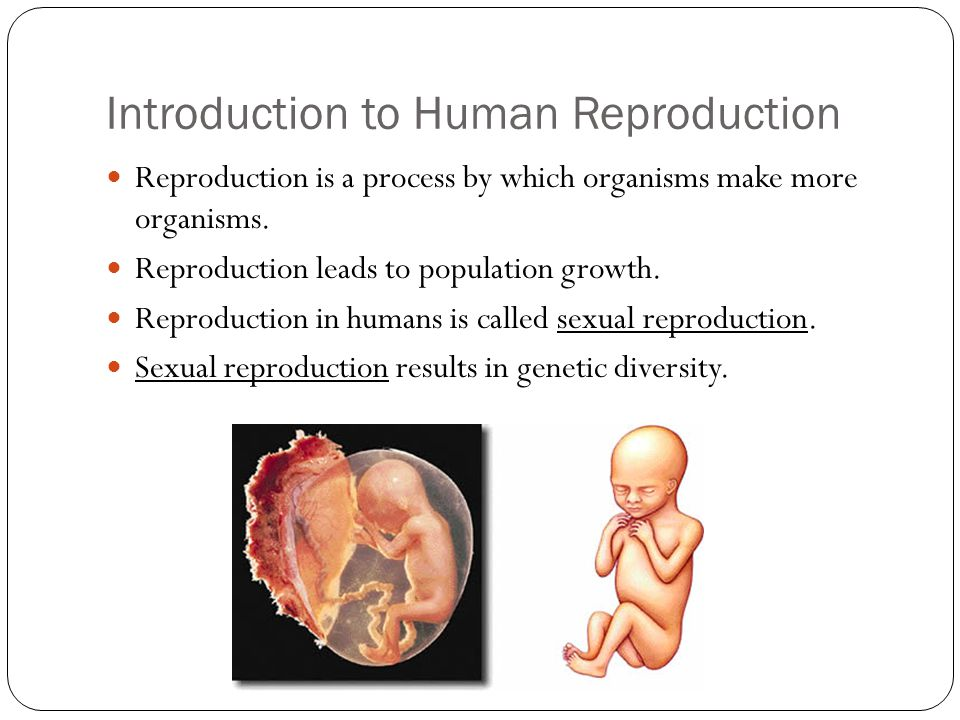 Reproduction in humans sexual reproduction