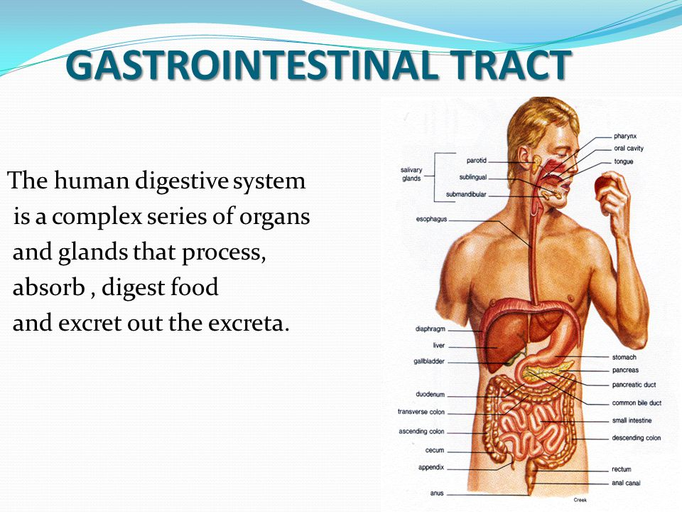 Gastro Intestinal Tract Diseases Ppt Download