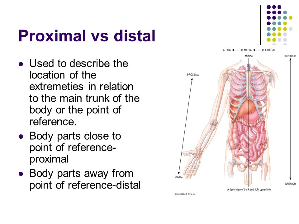 Proximal vs distal Used to describe the location of the extremeties in relation to the main trunk of the body or the point of reference.