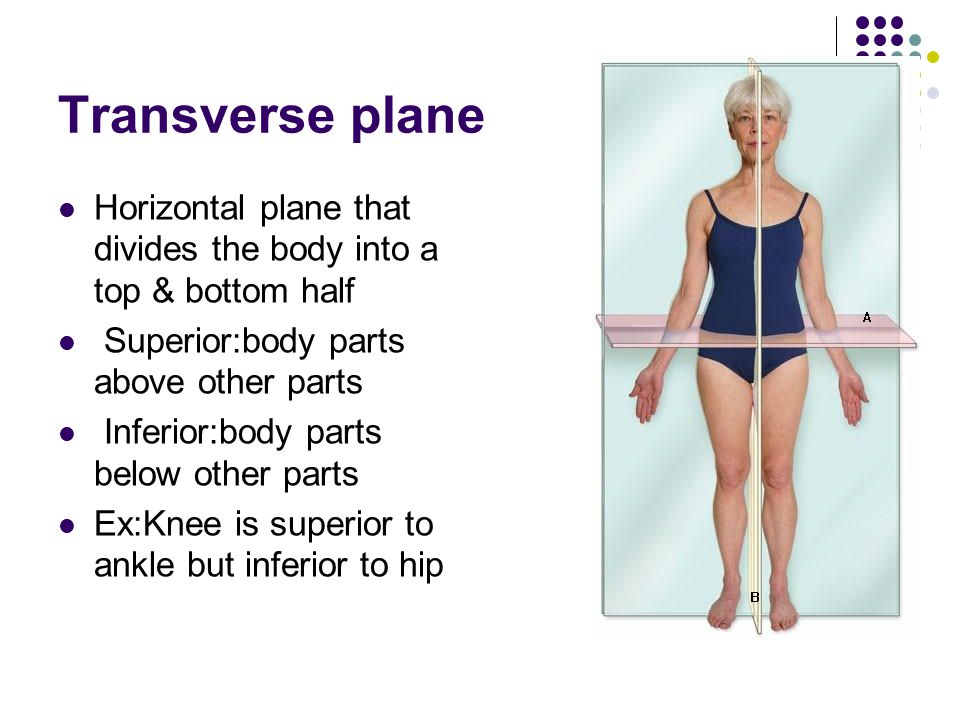 Transverse plane Horizontal plane that divides the body into a top & bottom half. Superior:body parts above other parts.