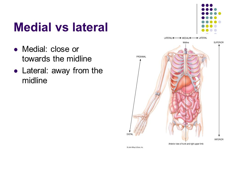 Medial vs lateral Medial: close or towards the midline