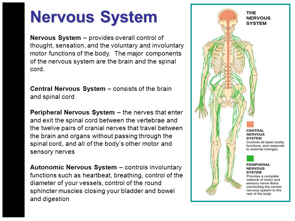 Injuries To The Head And Spine Ppt Download