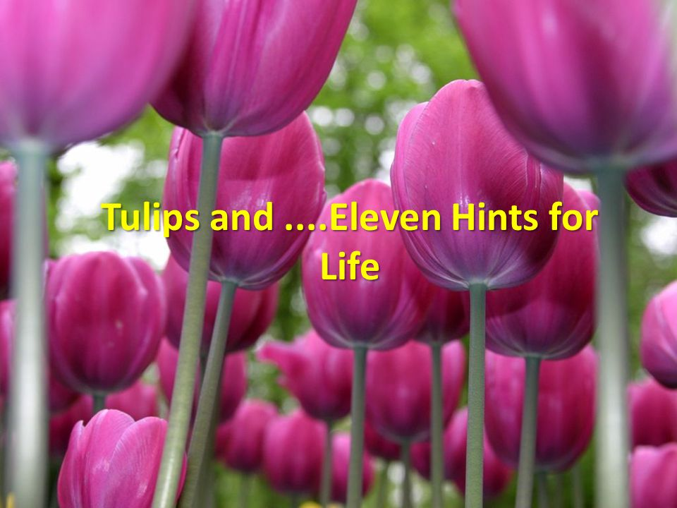 Tulips and ....Eleven Hints for Life