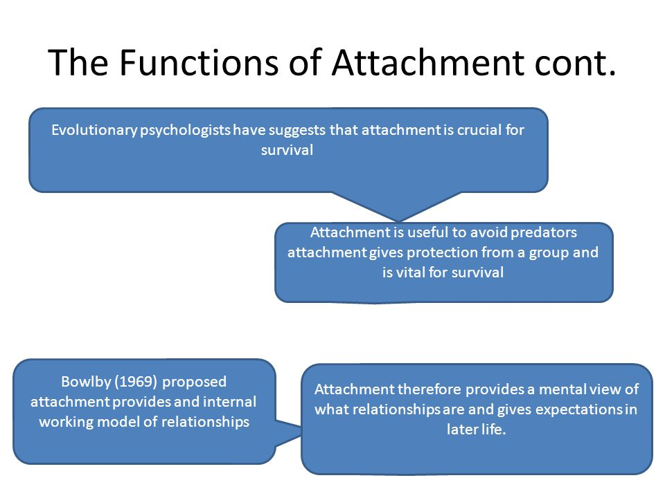 The Functions of Attachment cont.