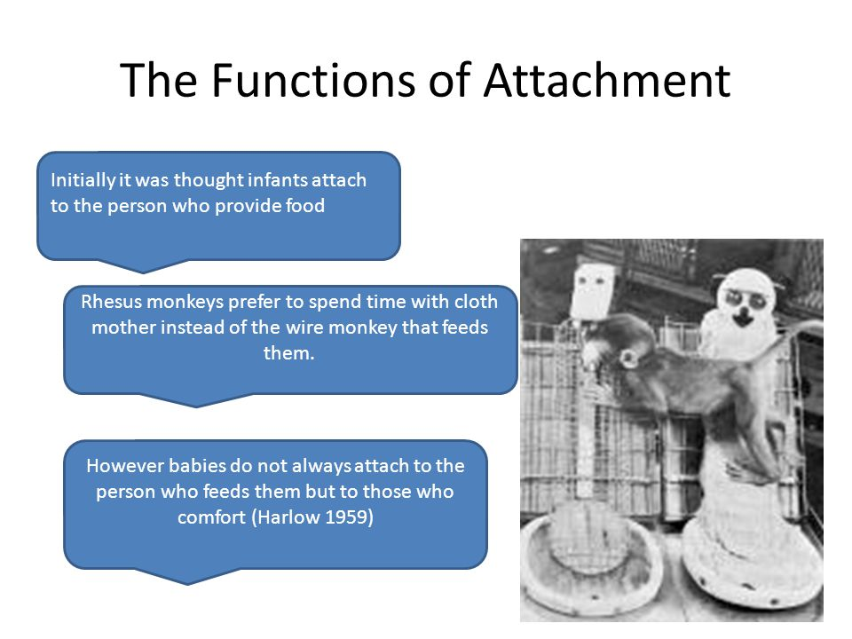 The Functions of Attachment