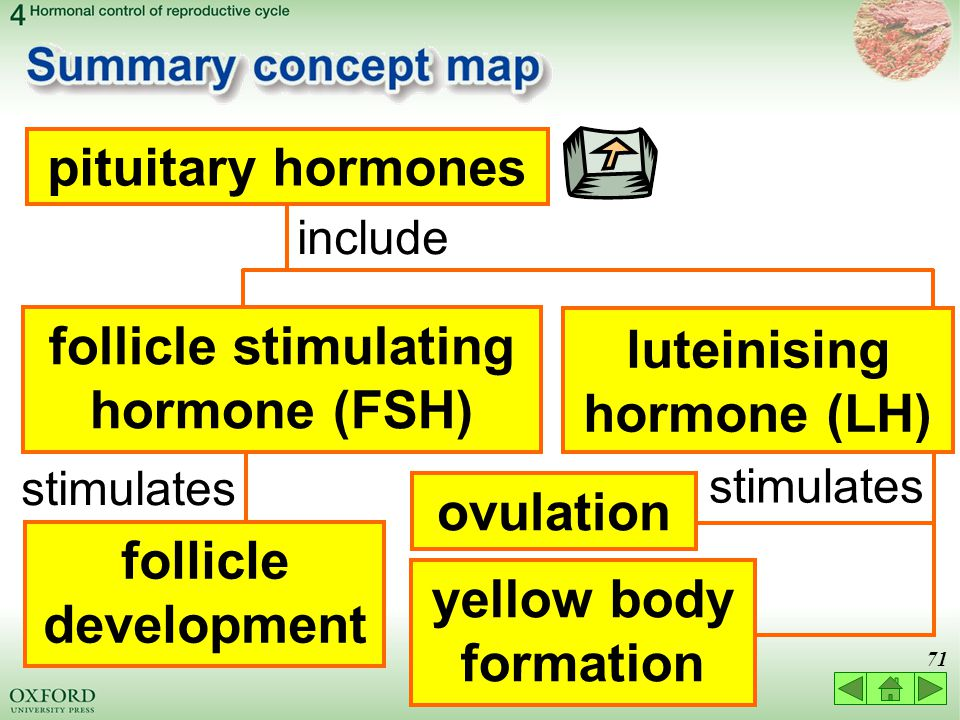 Hormone Concept Map.Think About 4 1 Hormonal Control Of The Menstrual Cycle 4 2 Use Of