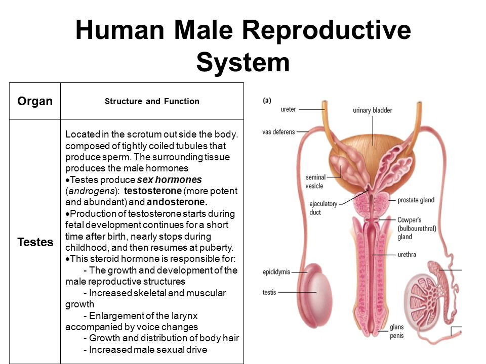 85 Reproduction And Hormones Ppt Video Online Download